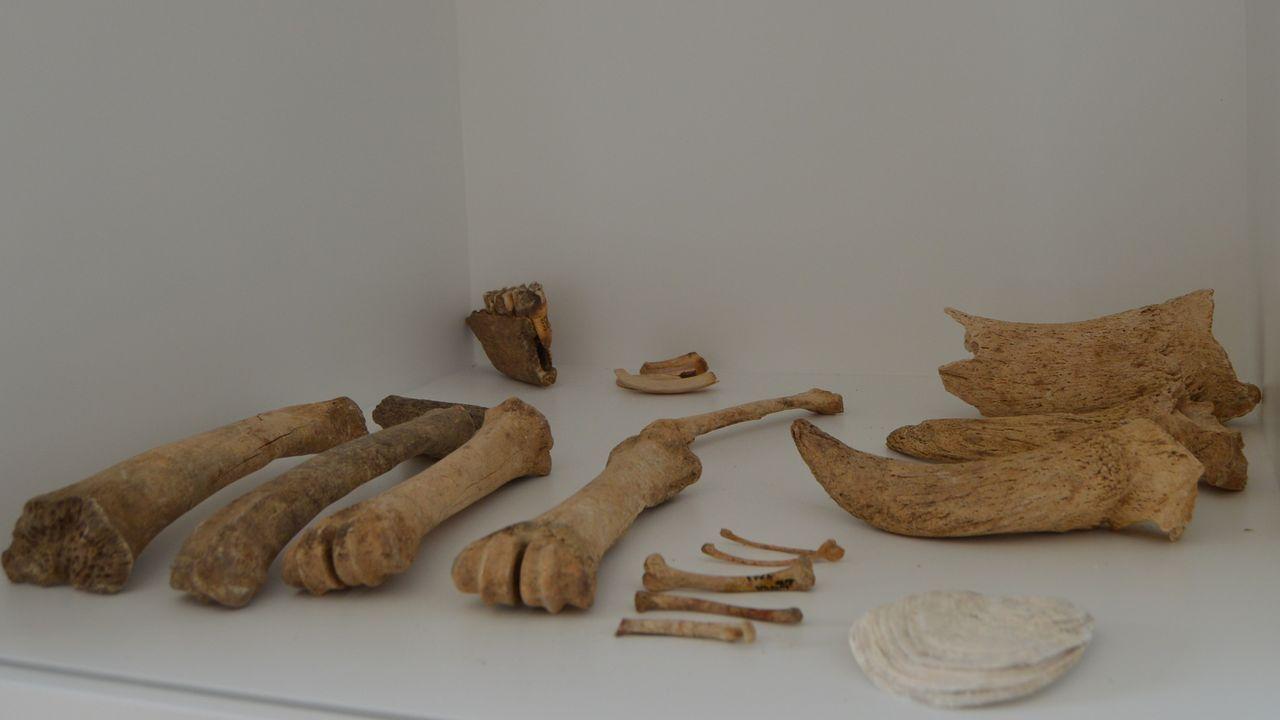 Restos de huesos hallados en la excavación del Mitreo de Lugo y que se exponen en el museo de la Domus