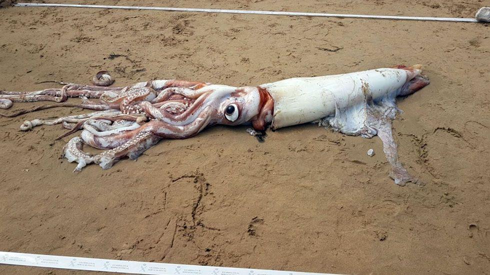 Lucha a muerte entre calamares gigantes por peces.Lara Roguez, la chef del restaurante Kraken del Acuario, con dos de sus creaciones culinarias