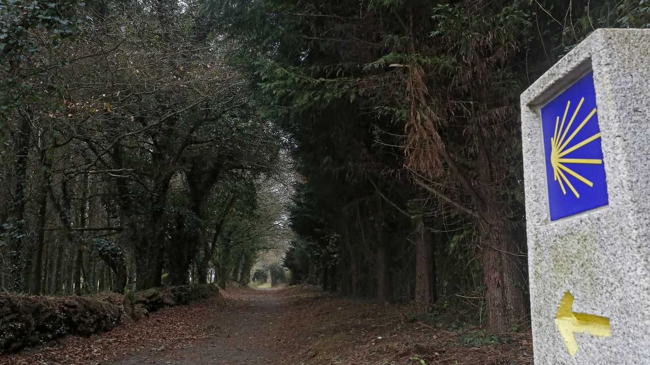 Sendero del penúltimo tramo del Camino Francés, a la altura del concello de O Pino, sin peregrinos