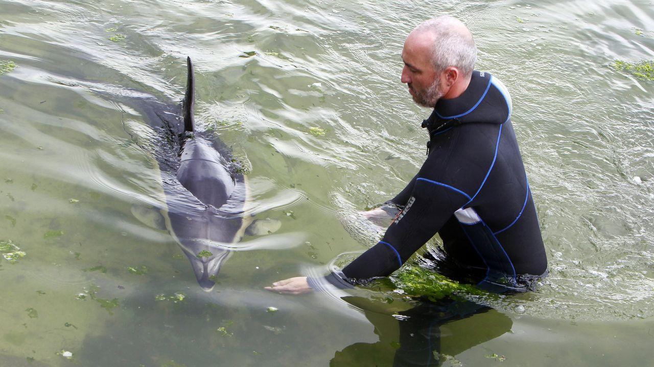 Intento de rescate de un delfín que varó en una playa de Arousa en junio de 2018