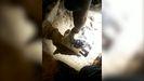 Protección Civil de Cerdedo-Cotobade rescata a un perro
