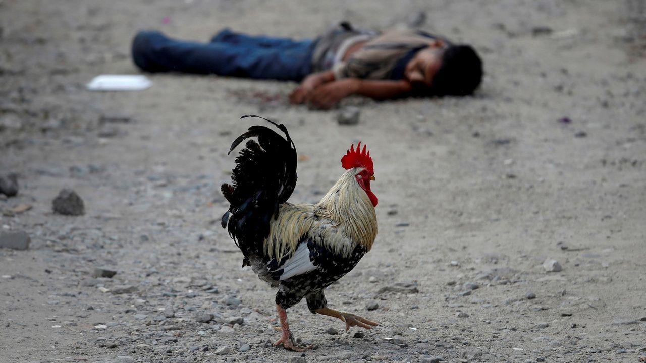 Un gallo pasa junto al cadáver de un pandillero del Barrio 18 en San Pedro Sula