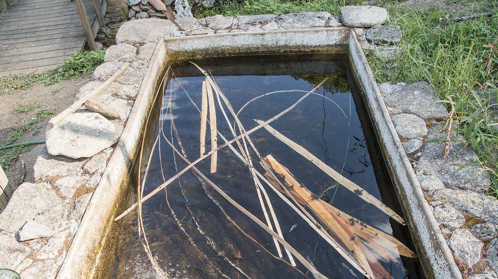 As varas secas se salgueiro son postas en remollo durante varios días para que abranden antes de proceder ao labrado