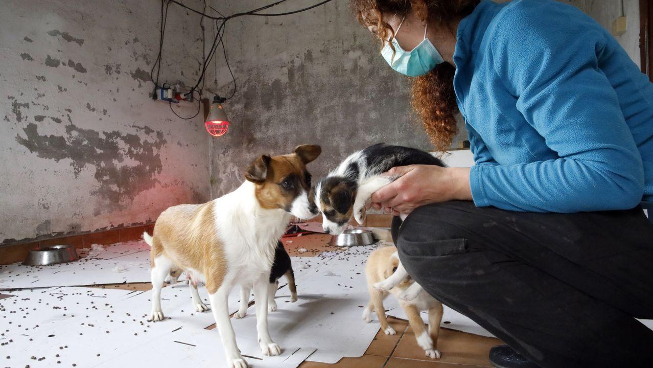 Algunos de los perros fueron trasladados a la protectora