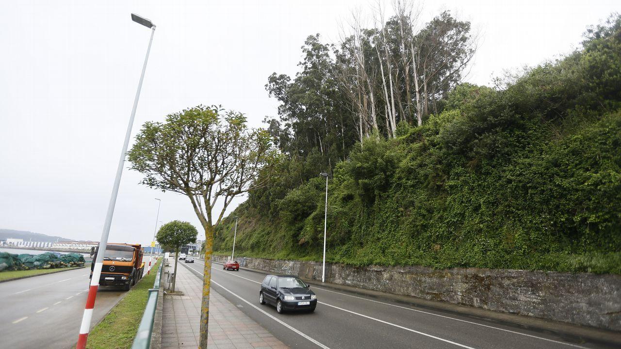 Los eucaliptos rebrotan en una de las zonas arrasadas por los incendios del pasado octubre, Chandebrito
