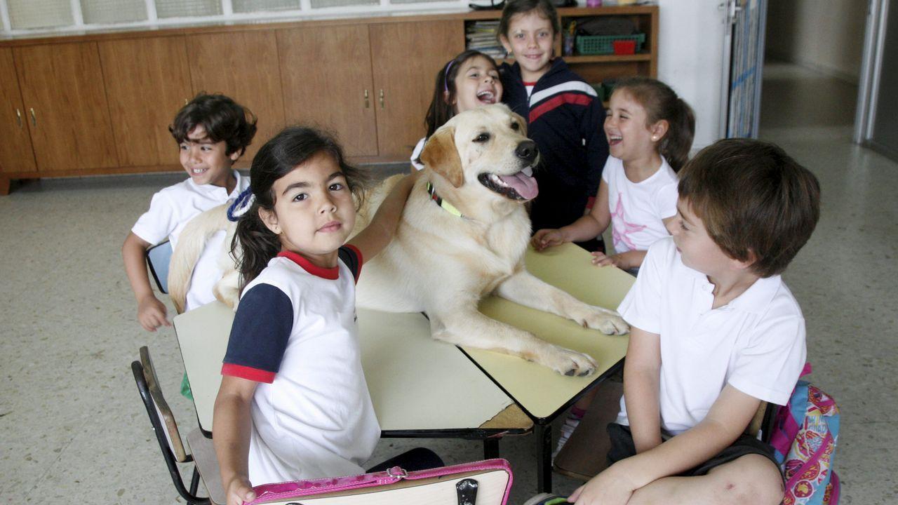 Perro Curro en el colegio Atocha