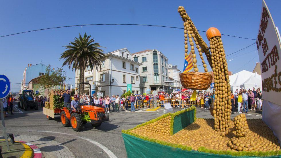 Nido de avispa asiática detectado en Gijón.Los llamativos desfiles no podrán ser este año