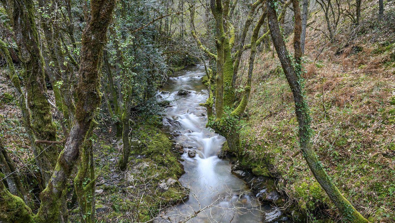 Una parte del camino discurre por el entorno del río Loureiro