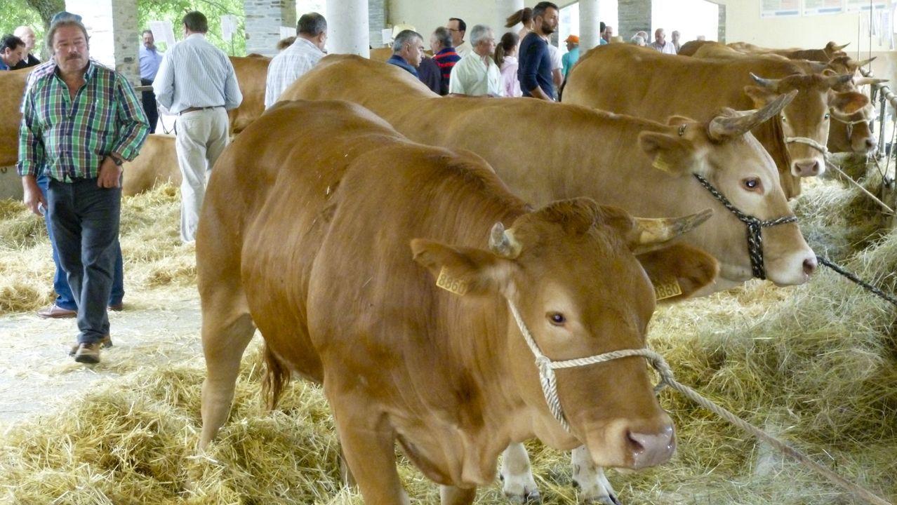Subasta de ganado en Adai