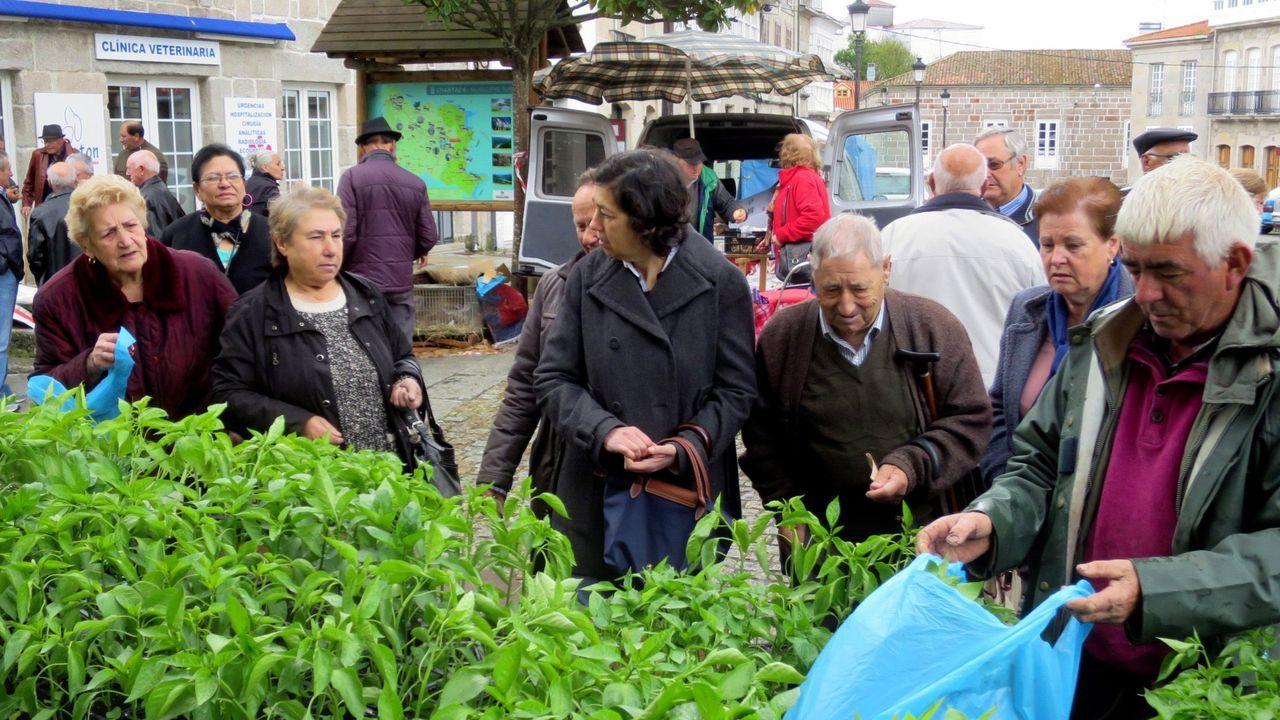 Los puestos de plantas (como el de la foto) y los de productos agroalimentarios son los únicos que se podrán instalar hoy en Chantada