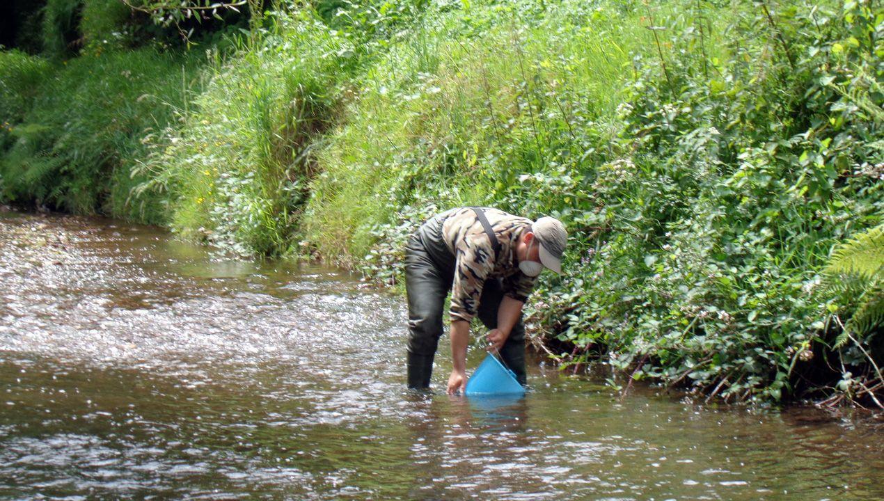 Suelta de alevines de trucha en el río Trubia, esta semana