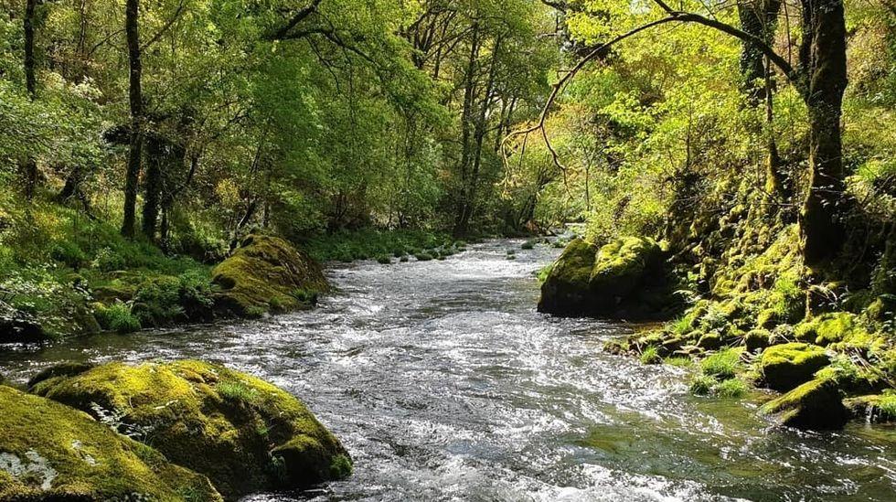 El río Gallo en Cuntis