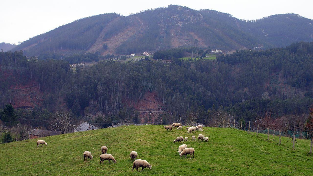 Los productores de ovino de zonas de montaña son unos de los que podrán baneficiarse del servicio