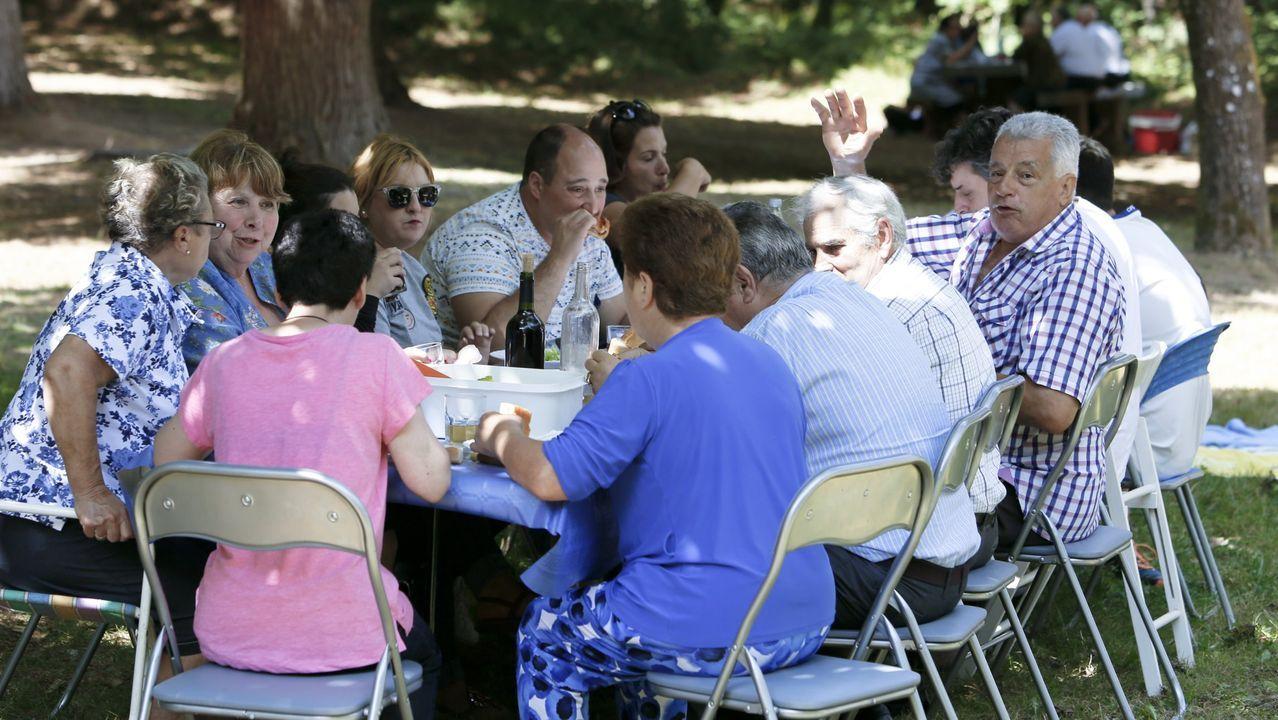 Un enjambre de velutinas se da un festín en un eucalipto recién talado en Zas.Bomberos de Santiago actúan sobre una nidificación de avispa asiática en Aríns