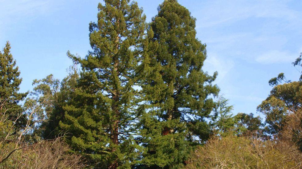 Gigantes entre los árboles y sin apenas protección en la comarca de Pontevedra.Participantes en un recorrido de presentación de las rutas pasan junto a una antigua alvariza