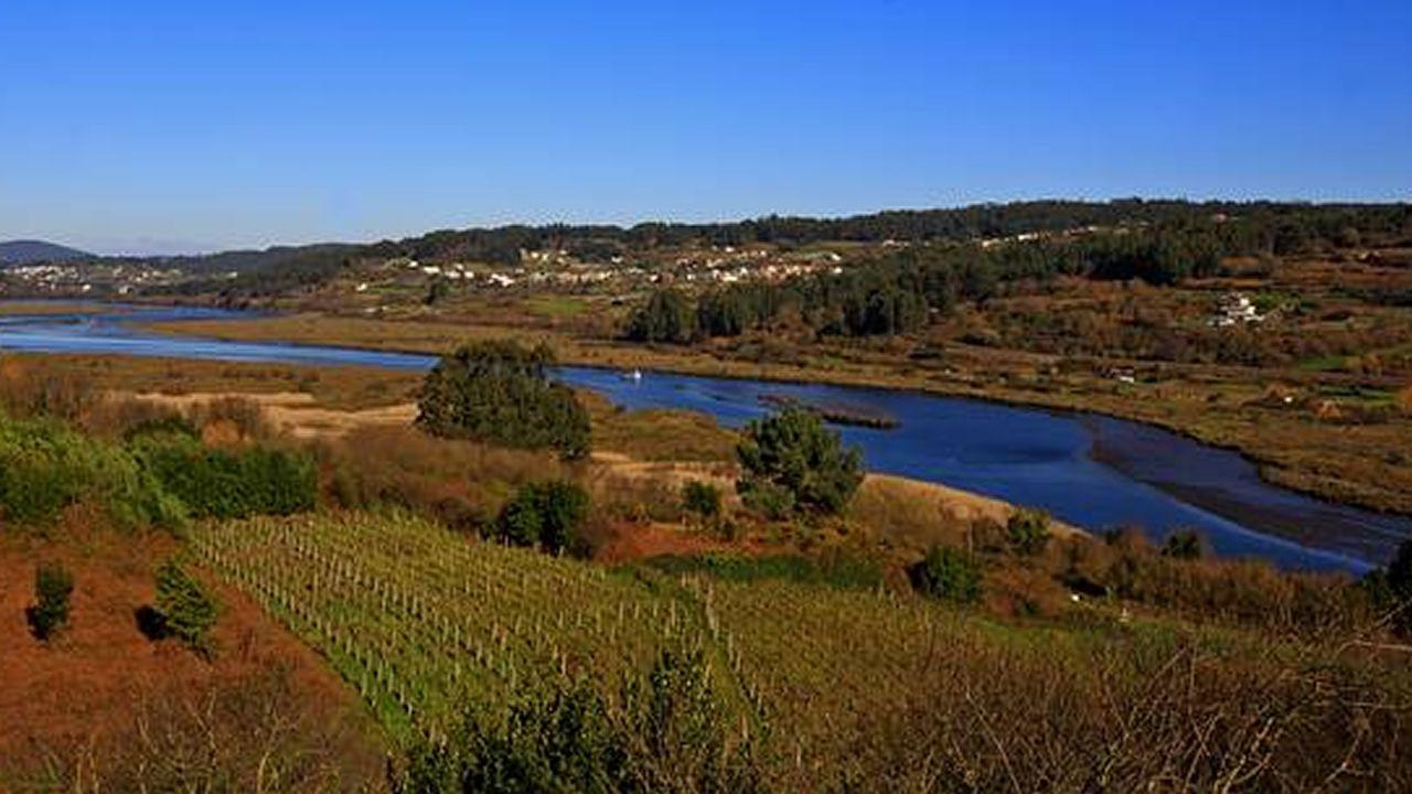 Un manto de juncos y viñedos ocupa un estuario que hasta el siglo XVIII era antesala de uno de los grandes puertos de Galicia, por donde se exportaba el vino local para Inglaterra. Hoy es el lugar de importancia comunitaria Betanzos-Mandeo.