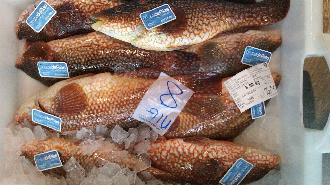 Pescados del día, con la etiqueta pescadeRías, en una foto de archivo