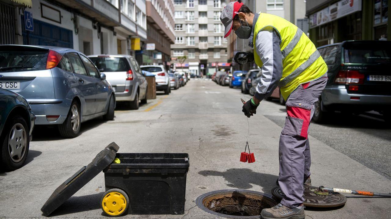 La lucha contra las plagas urbanas: tras los pasos de los animales indeseados