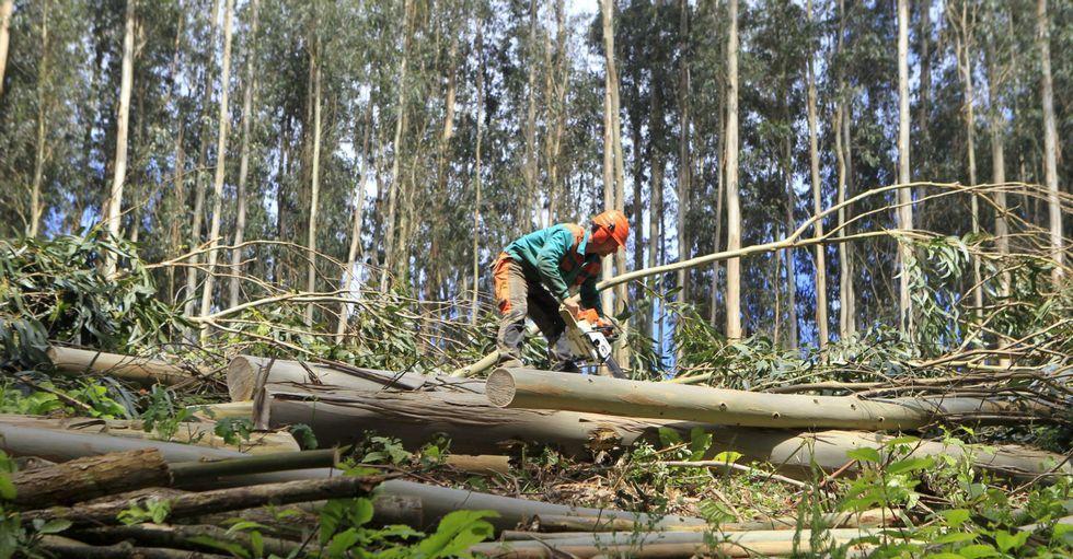 Trabajos forestales en la parroquia de Mera, en Ortigueira, en una imagen de archivo.