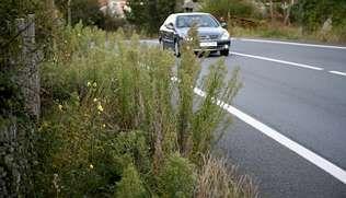 Una de las carreteras afectadas por la falta de limpieza es la que une Berdoias y Muxía. Se trata de la principal ruta de acceso a la villa de la Barca, pero el mantenimiento es deficiente. Además de