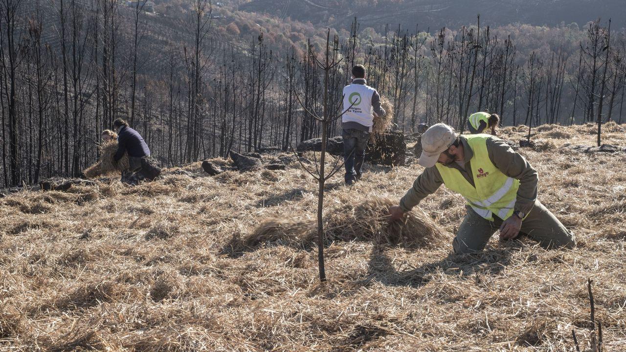 Limpieza de los montes quemados