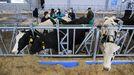 La Granxa Experimental do Leite está atendida por personal de la Diputación lucense
