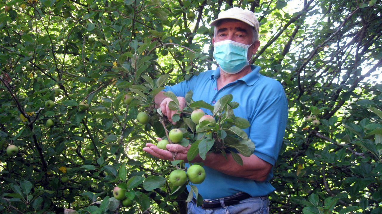 Carlos Hugo Rico, con uno de los manzanos que cuida en su finca, en la parroquia de A Órrea
