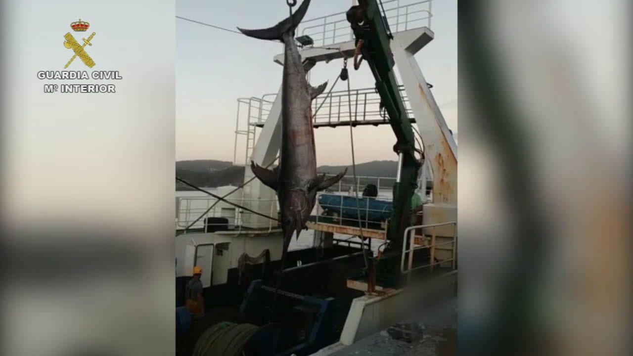 Decomisan a un arrastrero atracado en Corme un pez espada, un atún rojo y otro patudo