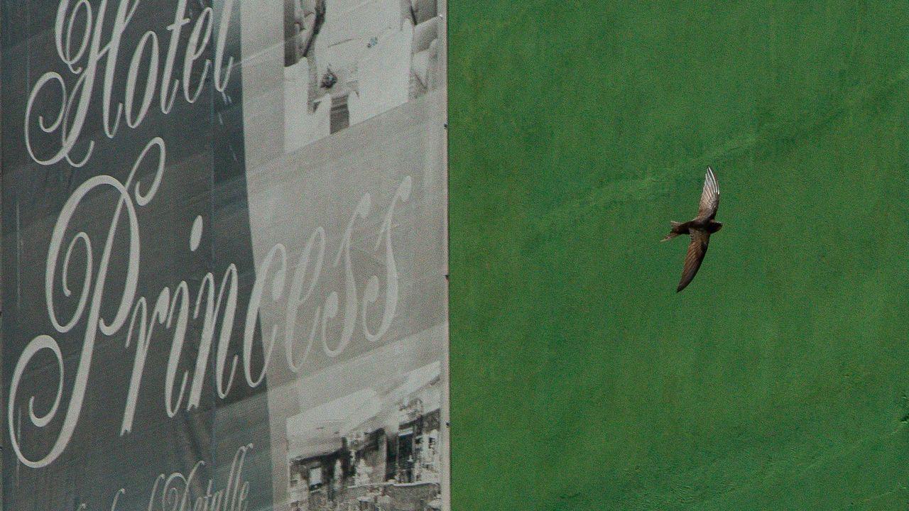 Mitin de Pedro Sánchez en Ourense.Estorninos y otras especes, como los aviones y vencejos, vuelan ya por el centro de Ourense