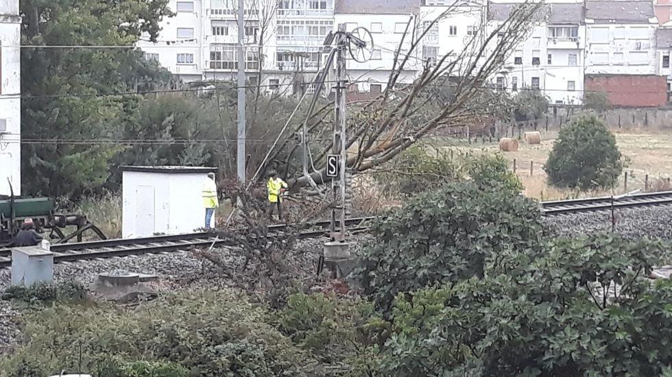 Personal de mantenimiento corta un árbol atravesado en la vía del tren en Monforte