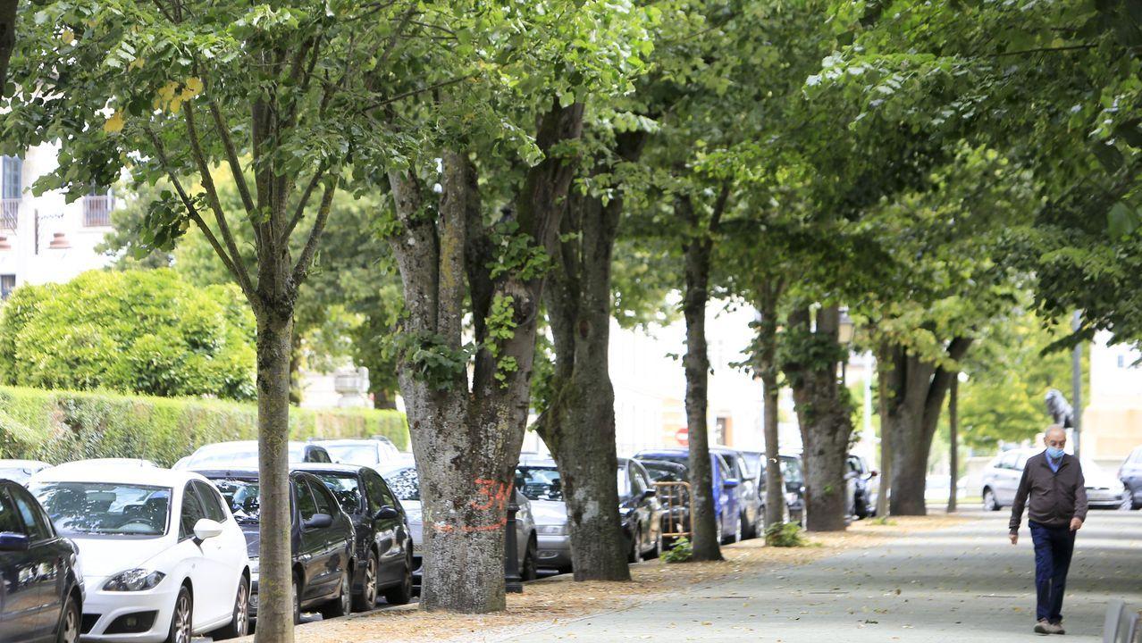 La tala de los árboles que suponen un riesgo para la ciudadanía comenzó ayer. Los que han de talarse están marcados con un número