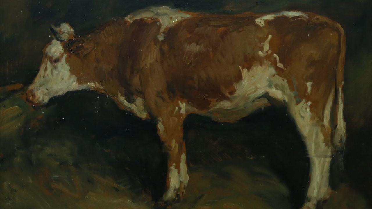 «Estudio de vaca», de Sotomayor