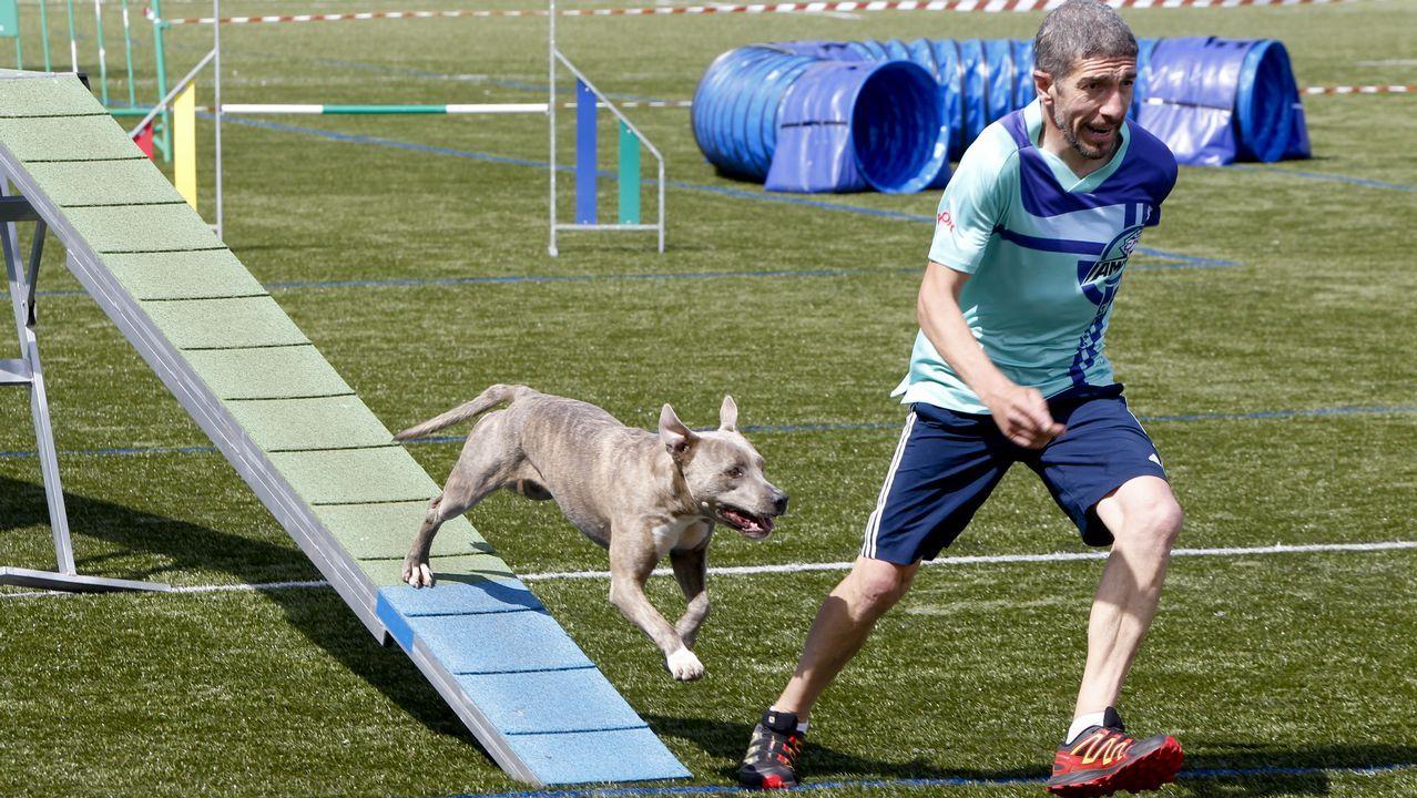 Los perros más ágiles se reunieron en O Milladoiro.Asunción Rodríguez, de la bodega Crego e Monaguillo