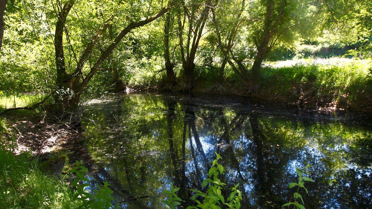 fervenza bano.BOSQUE DA FERVENZA: Está a veinte minutos de Lugo, en O Corgo, y tiene robles de más de 300 años. Ubicado en el curso alto del Miño, dentro de una Reserva de la Biosfera, es uno de los bosques de inundación más importantes de la península