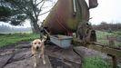 Uno de los perros recogidos en Montemeá  por la protectora de Lugo vivía encadenado a la cisterna de un camión