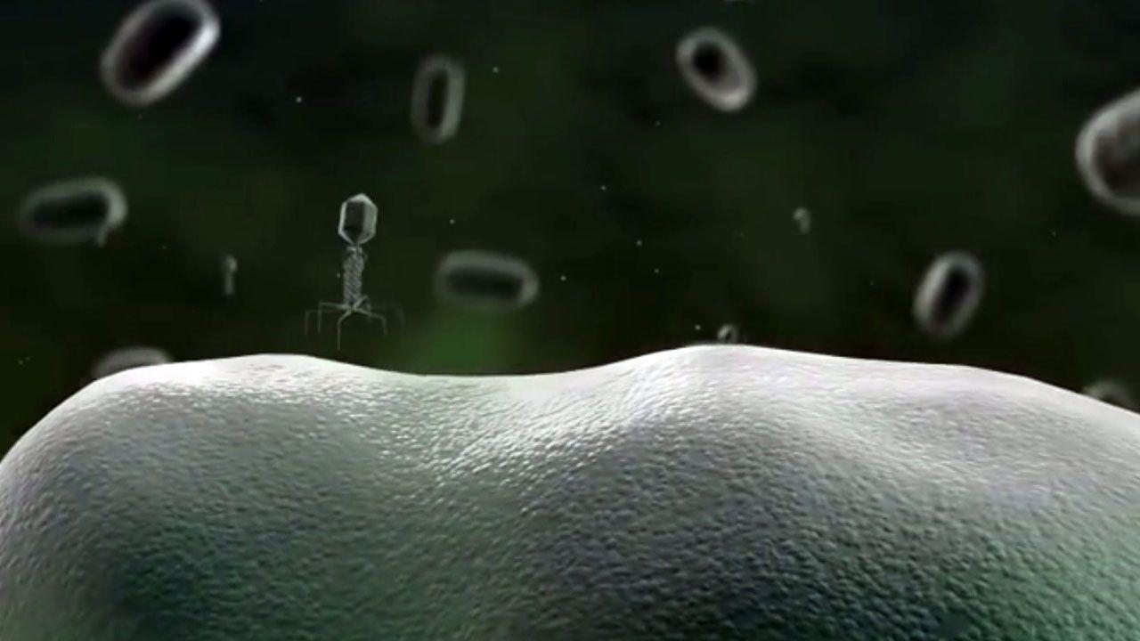 hormiga lasius.Animación de un bacteriógrado en 3D