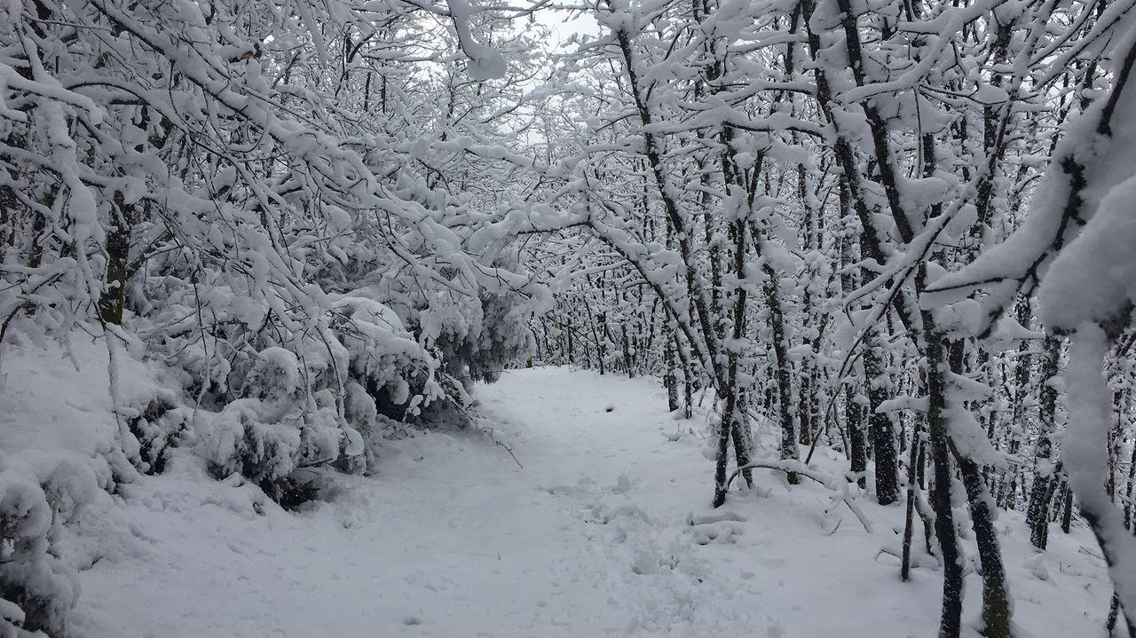 Un camino de la Devesa da Rogueira bajo una nevada, en una imagen de archivo