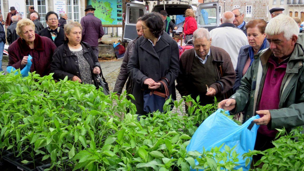 Venta de plantas en la feria de Chantada