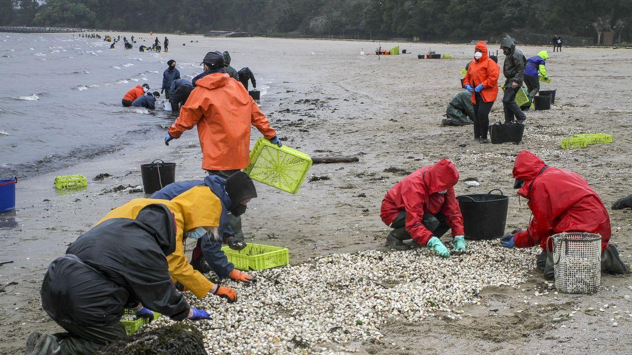 Marisco muerto cubre las playas de Rianxo.Perros en la playa de San Lorenzo, en el primer día tras el cierre de la temporada de baños