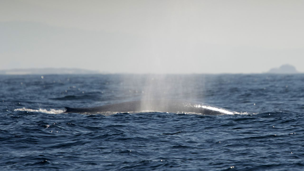 El gigante de los mares vuelve a pasearse por las rías gallegas