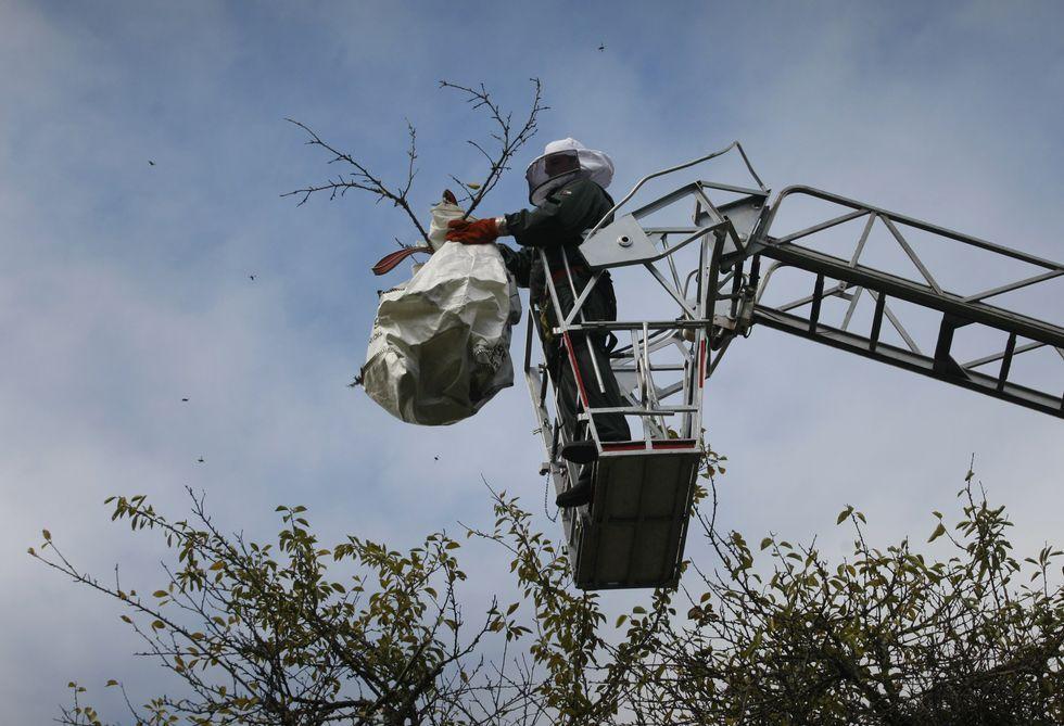 Un operario de Plagal, respaldado por Protección Civil, consiguió retirar ayer un nido en Rubiáns.
