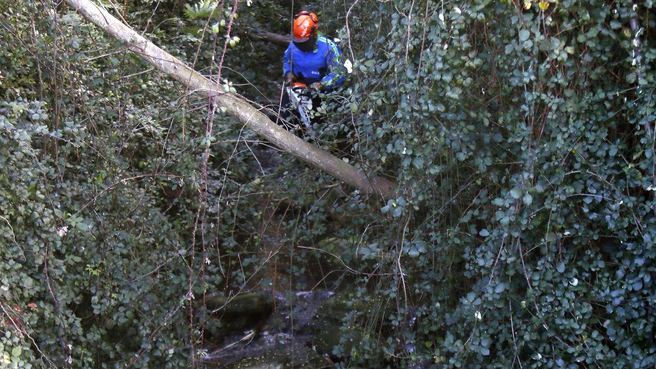 Así está la laguna de Carballo.Fuera eucaliptos caídos, troncos o acacias. Un operario de Eulen cortando este lunes con una motosierra obstáculos en un tramo con riesgo de inundación del río As Nogueiras, en Viveiro