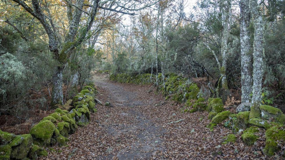 El camino de los miradores discurre por zonas boscosas