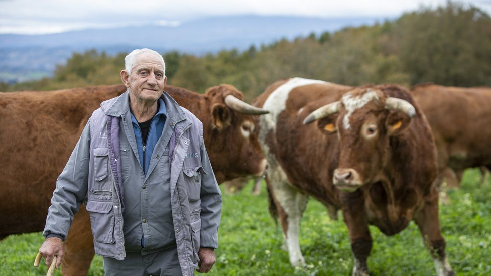 José López Prieto, con los bueyes que tiene a su cargo en la granja monfortina