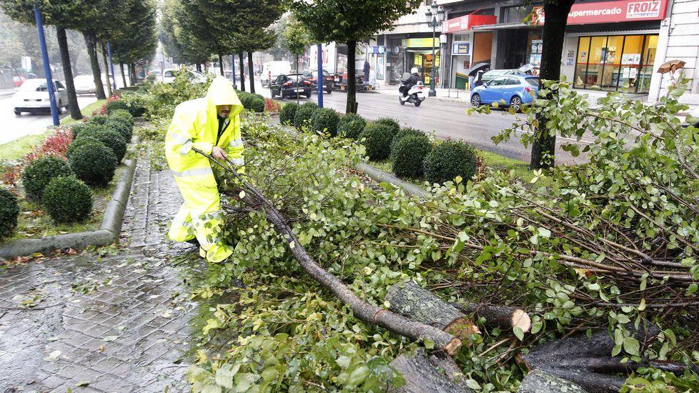Árbol derribado por el viento en Vigo.