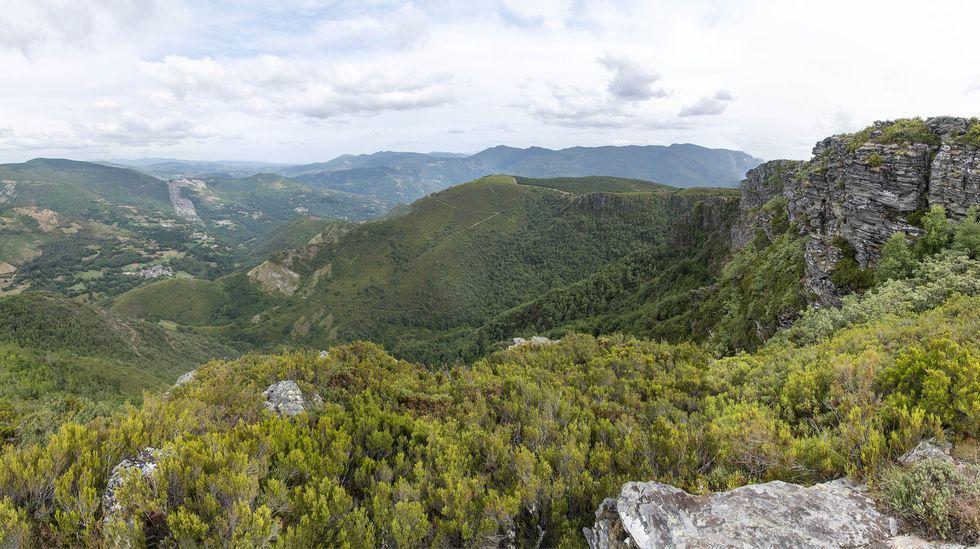 Ejemplares de la orquídea Orchus masculae en el Alto da Pedra