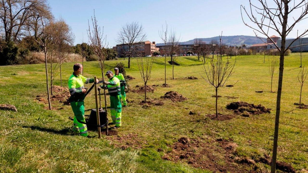 Plantación de árboles en el campus de Gijón