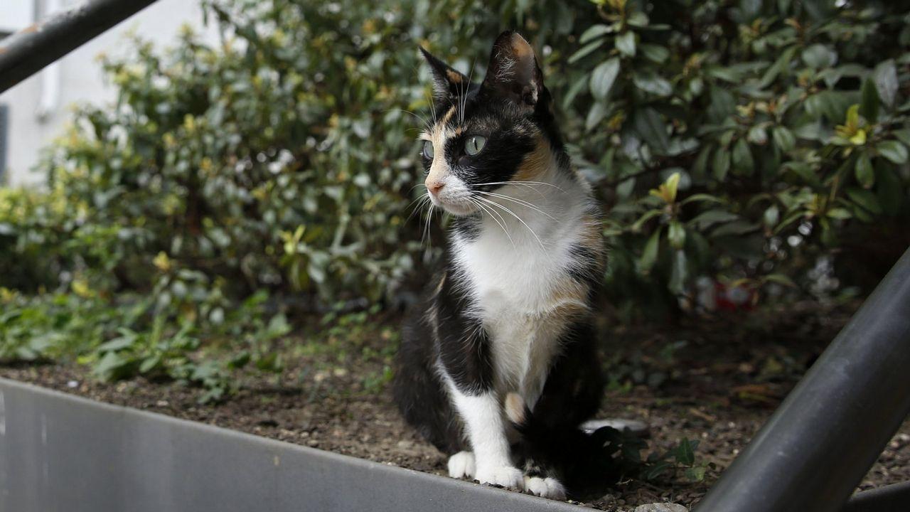 Una foto de archivo de un gato