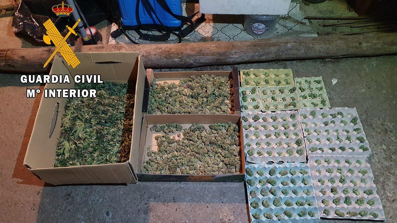 Plantación de marihuana encontrada en Valdés