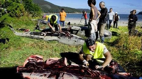 Personal del Cemma realizó ayer las necropsias a los cetáceos varados en el arenal de Arealonga.